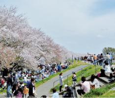 熊谷さくら堤